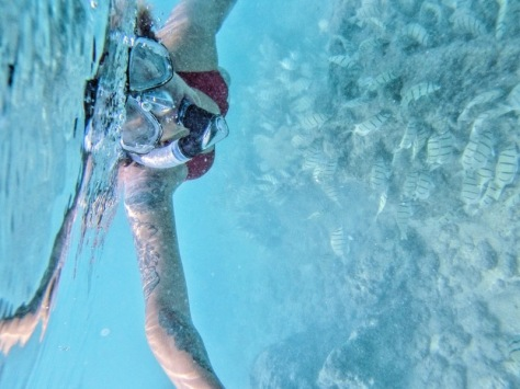 Snorkling-Hawaii